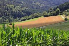 Weizenfelder in den Bergen von Deutschland Lizenzfreie Stockbilder