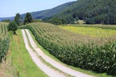 Weizenfelder in den Bergen von Deutschland, Hettigenbeuern Stockfoto