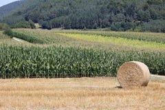 Weizenfelder in den Bergen von Deutschland, Hettigenbeuern Lizenzfreies Stockbild