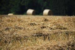 Weizenfelder in den Bergen von Deutschland, Hettigenbeuern Lizenzfreie Stockbilder