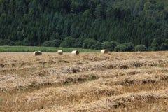 Weizenfelder in den Bergen von Deutschland, Hettigenbeuern Stockfotografie