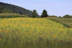 Weizenfelder in den Bergen von Deutschland, Hettigenbeuern Stockbilder