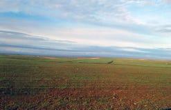 Weizenfelder in einem bewässerten Bereich lizenzfreie stockfotos