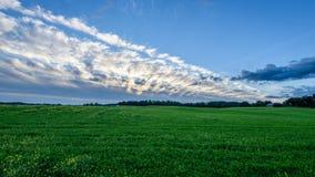 Weizenfelder im Sommer mit jungen Ernten Lizenzfreie Stockfotografie