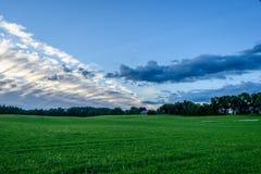 Weizenfelder im Sommer mit jungen Ernten Lizenzfreies Stockbild