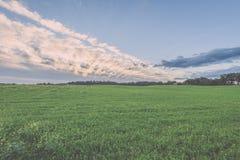 Weizenfelder im Sommer mit jungen Ernten - Weinleseblick Lizenzfreie Stockbilder