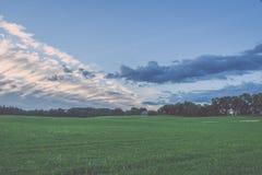 Weizenfelder im Sommer mit jungen Ernten - Weinleseblick Lizenzfreie Stockfotografie