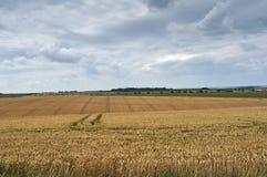 Weizenfelder mit Wolken Stockbild