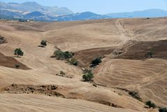 Weizenfelder nähern sich Almogia, Andalusien, Spanien. Stockbild