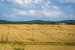Weizenfelder, Olivenölseifen- und Leon-Region, Spanien lizenzfreies stockfoto