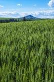 Weizenfelder in Ost-Staat Washington Stockfotos