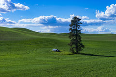 Weizenfelder in Ost-Staat Washington Lizenzfreie Stockfotos