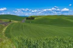 Weizenfelder in Ost-Staat Washington Lizenzfreies Stockfoto