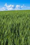 Weizenfelder in Ost-Staat Washington Lizenzfreie Stockfotografie