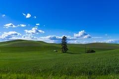 Weizenfelder in Ost-Staat Washington Lizenzfreie Stockbilder