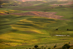 Weizenfelder am Sonnenuntergang Stockfotografie