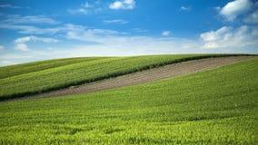 Weizenfelder und Ackerlandlandschaft Lizenzfreies Stockbild