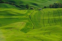 Weizenfelder und -bauernhof lizenzfreies stockbild