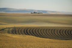 Weizenfelder und Bauernhof, Staat Washington lizenzfreies stockbild