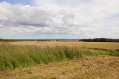 Weizenfelder und Distelblumen Stockfoto