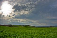 Weizenfelder und -obstgärten am Vorfrühling Stockfotografie
