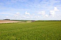 Weizenfelder und Tal von York Stockbilder