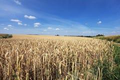 Weizenfelder unter der Sonne Stockfotografie