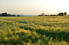 Weizenfelder Stock Photos