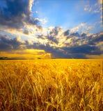 Weizenfeldlandschaft Lizenzfreie Stockfotografie