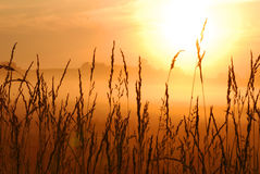 Weizenfeldsonnenaufgang lizenzfreies stockfoto