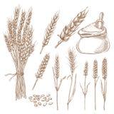 Weizengetreideährchen, -korn und -Mehlsack vector Skizzenillustration Hand gezeichnete lokalisierte Bäckereigestaltungselemente stock abbildung