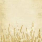 Weizenhintergrund Lizenzfreies Stockbild