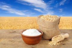 Weizenkörner und -mehl auf Feldhintergrund Stockbilder