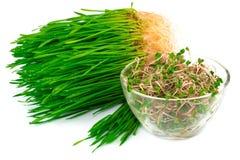 Weizenkeim mit Rettichmikrobe auf Platte Lizenzfreie Stockbilder
