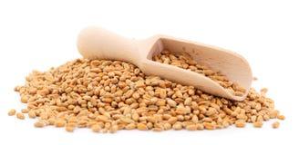 Weizenkorn in einer h?lzernen Schaufel lizenzfreie stockfotografie
