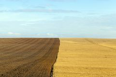 Weizenlandwirtschaftsfeld Lizenzfreies Stockfoto