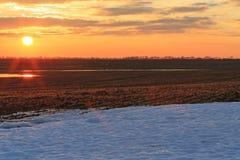 Weizenleiter brach durch den Schnee lizenzfreies stockfoto