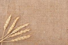 Weizenohren Stockbild