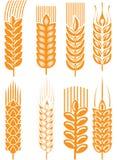 Weizenohren Lizenzfreies Stockfoto