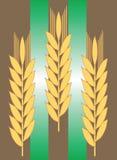 Weizenohren Stockfotografie