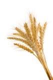 Weizenohren stockfotos