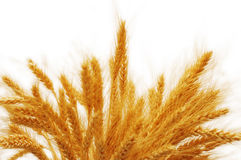 Weizenohren getrennt Stockbild
