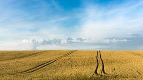 Weizenpanorama des Sommers im Freien Stockfoto