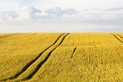 Weizenpanorama des Sommers im Freien Stockbild