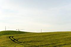 Weizenpanorama des Sommers im Freien Lizenzfreies Stockbild