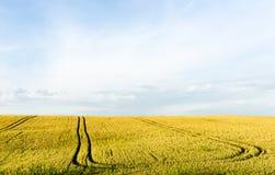 Weizenpanorama des Sommers im Freien Lizenzfreie Stockbilder
