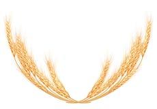 Weizenspitzen auf weißer Schablone ENV 10 Lizenzfreie Stockbilder