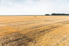 Weizenstoppel auf einem geernteten Gebiet Stockfotos