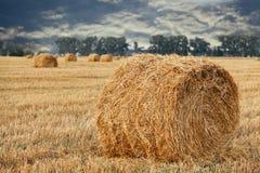 Weizenstroh rollt auf dem Feld Stockbild