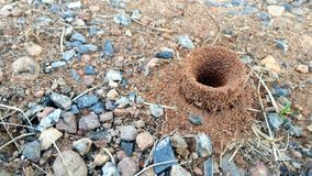 Wejście mrówki gniazdeczko obraz royalty free